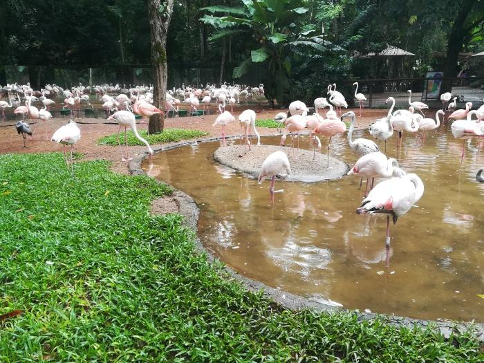 Brasil, Parque das Aves, Foz do Iguazu